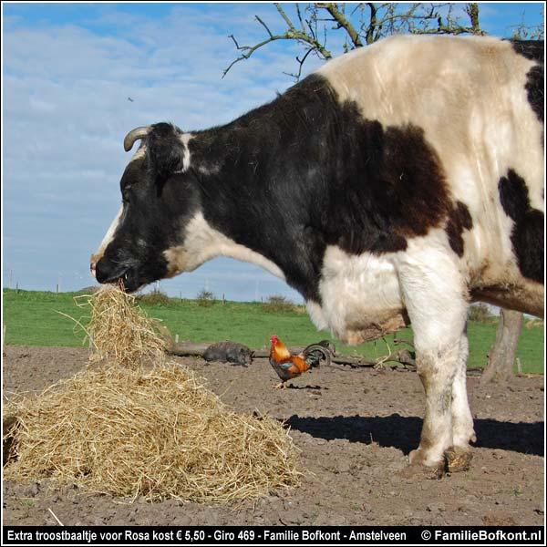 hoeveel hooi eet een paard